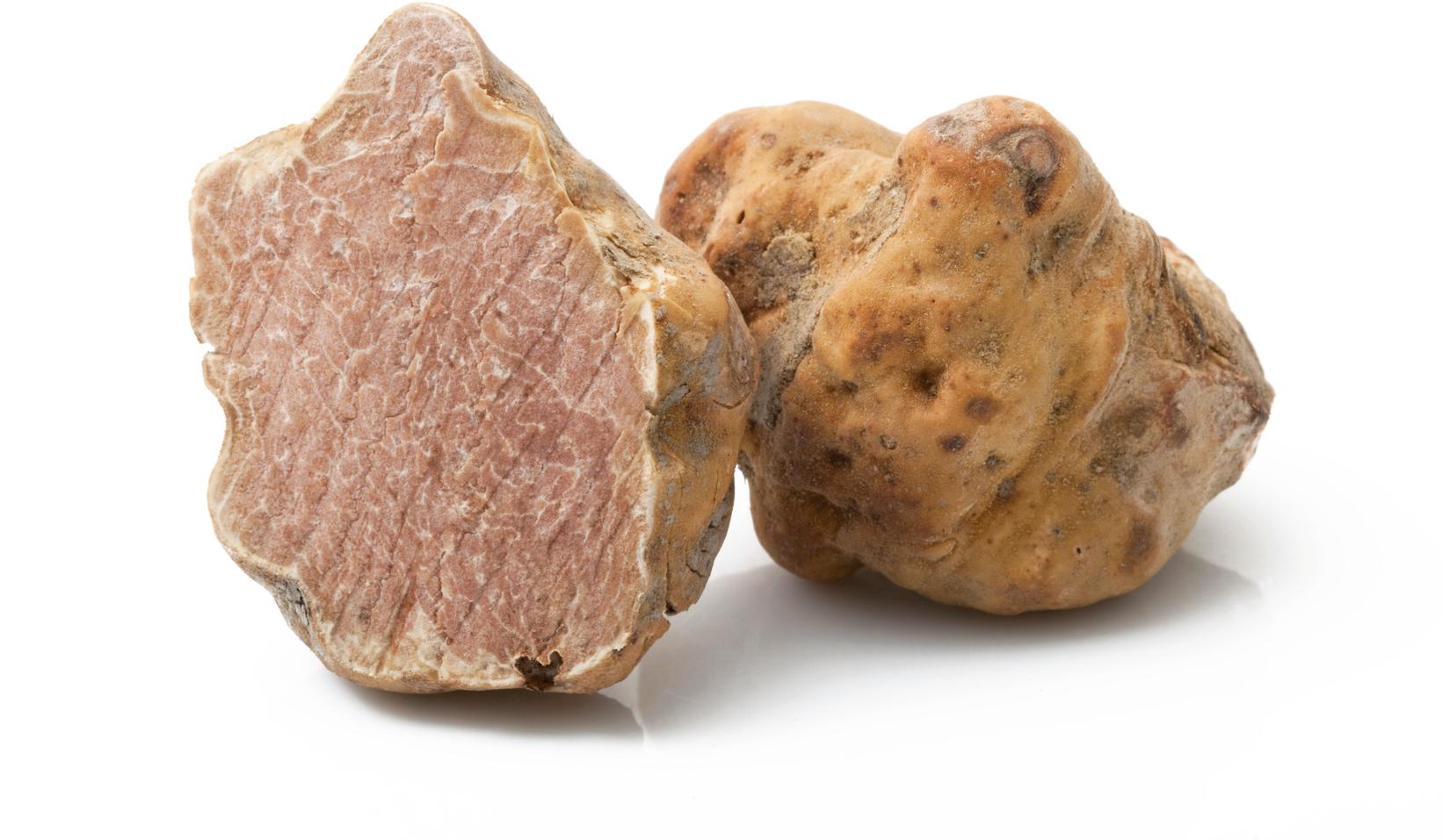 Prezzo da record per il tartufo bianco, raggiunge i 6 mila euro al chilo