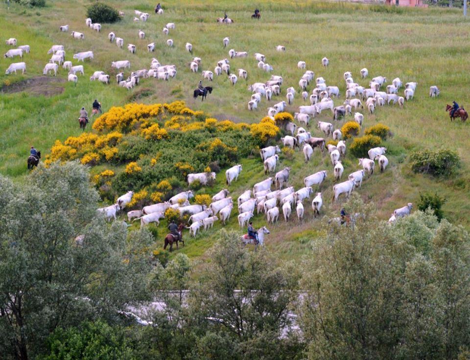 La transumanza nel registro nazionale dei Paesaggi Rurali