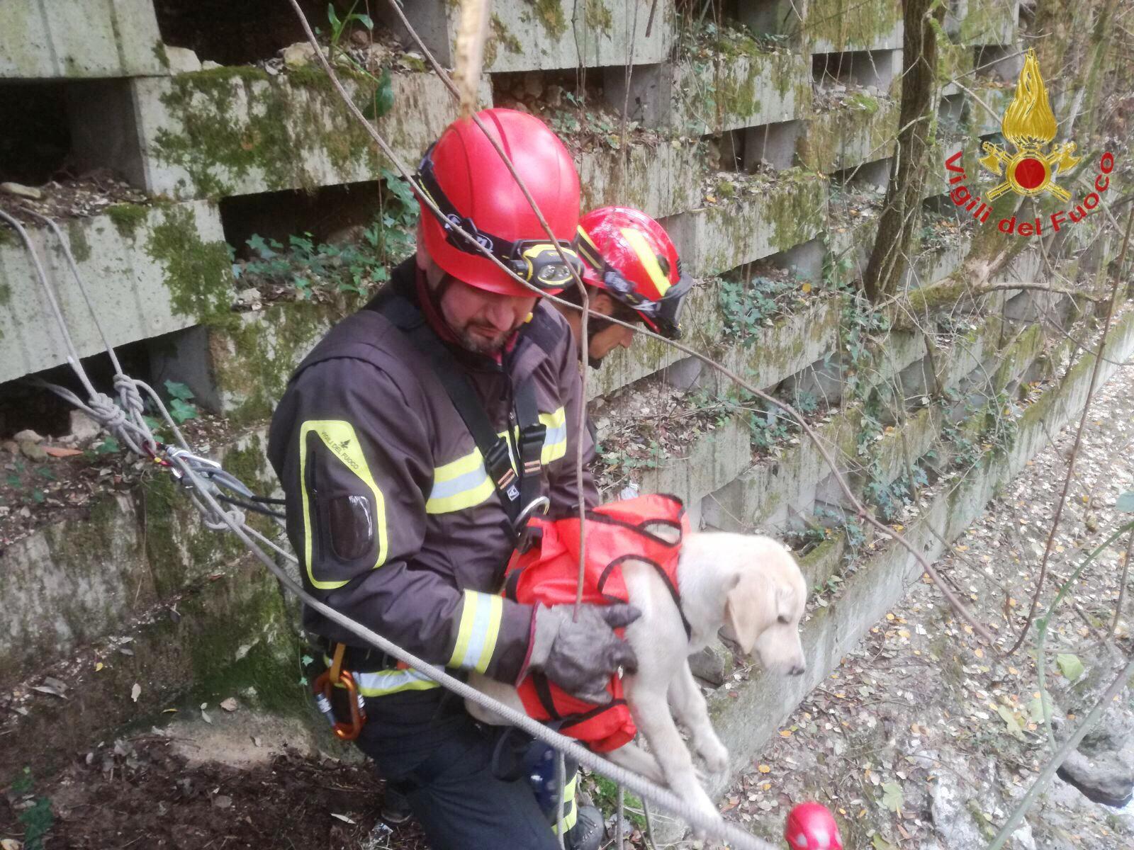 Isernia, i Vigili del Fuoco salvano un cucciolo di cane nel dirupo