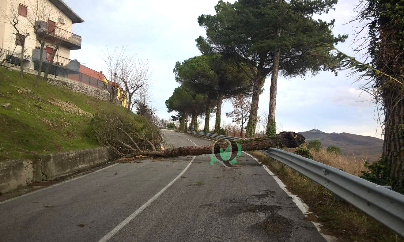 Forte vento, alberi caduti su Bifernina e SS 87: Vigili e Anas all'opera (FOTO)
