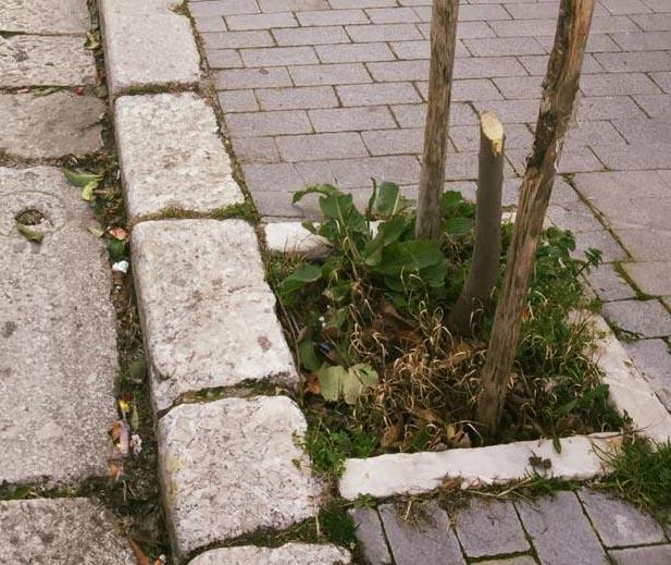 Alberi danneggiati, l'appello del Comune per trovare i responsabili