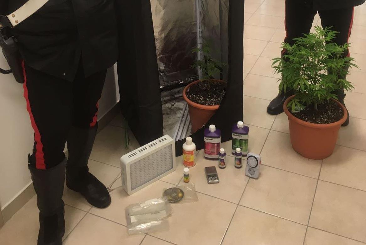 Sballo di Carnevale e piante di marijuana in casa, fermati due giovani