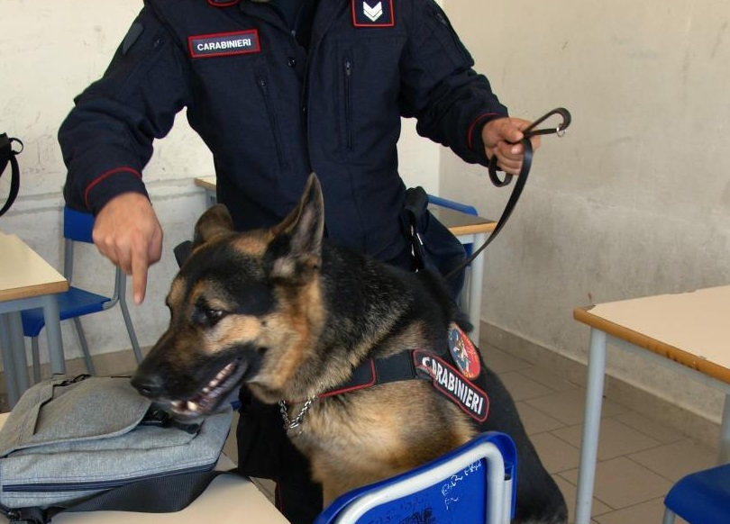 Carabinieri. Ancora denunce e sequestri, rinvenuta droga tra i banchi di scuola
