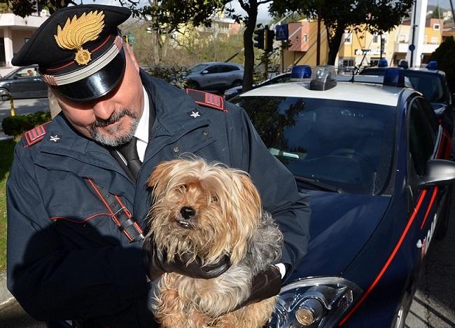 Abbandonato dal padrone sulla provinciale, cane salvato dai Carabinieri