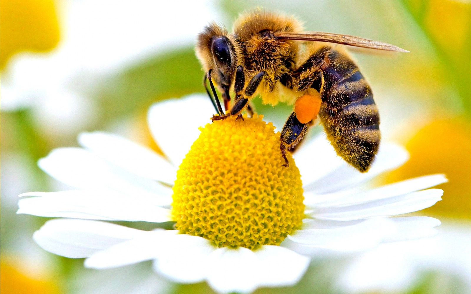 Giornata internazionale delle api all'Agrimercato di Campagna Amica