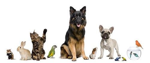 Il comune di Agnone a tutela degli animali domestici