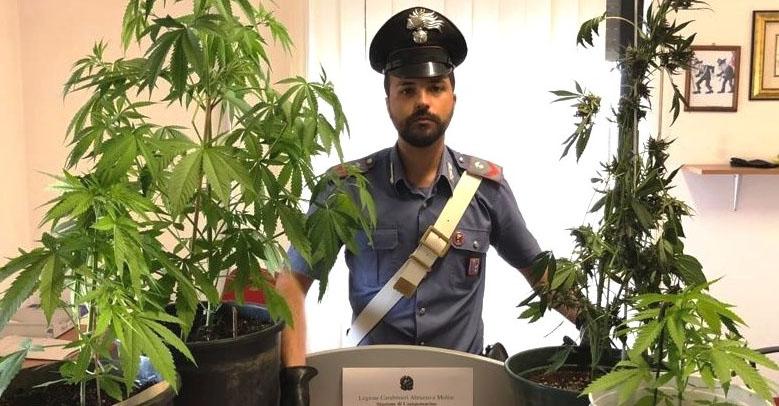 Piante di marijuana nel cortile, arrestato 30enne