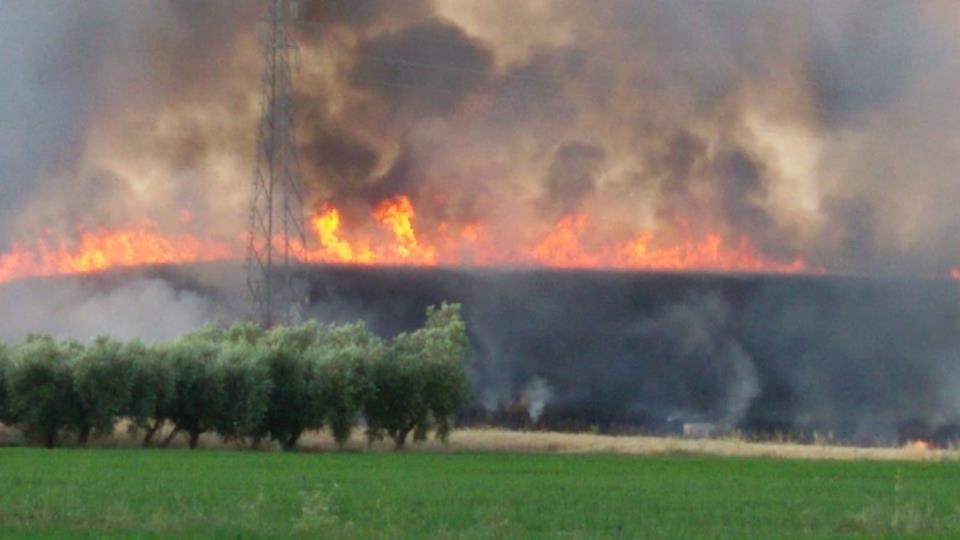 Incendio divora otto ettari di grano, danni per 10mila euro