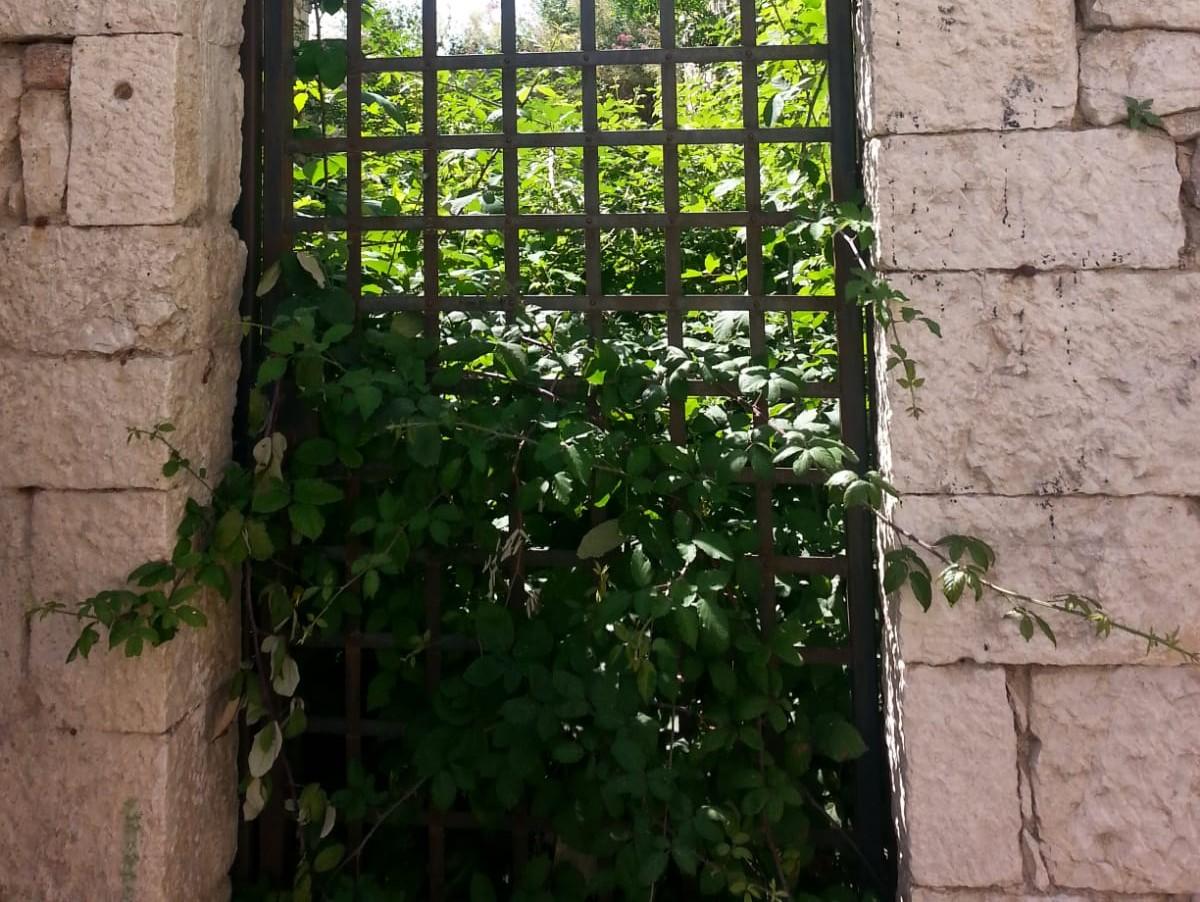 """Degrado nei pressi della torre della Delicata, i residenti: """"Erbacce spropositate"""""""