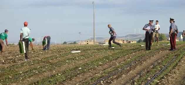 Lavoratori irregolari, 10mila euro di multa per un'azienda agricola