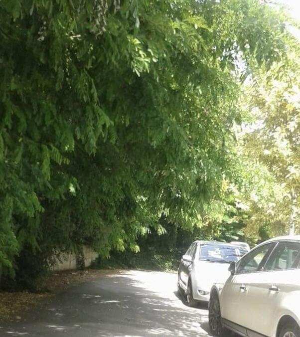 Isernia, la vegetazione invade via Bachelet