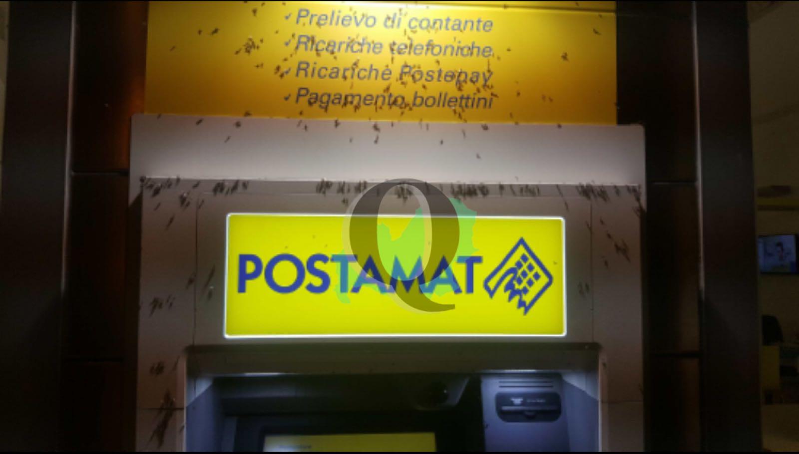 Poste centrali, bancomat preso d'assalto dagli insetti