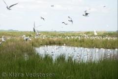 Fugleliv på Hjarnø