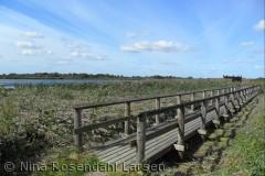 Bro ud til fugletårnet ved Lillesø, Lille Vildmose ninarlarsen@yahoo.dk