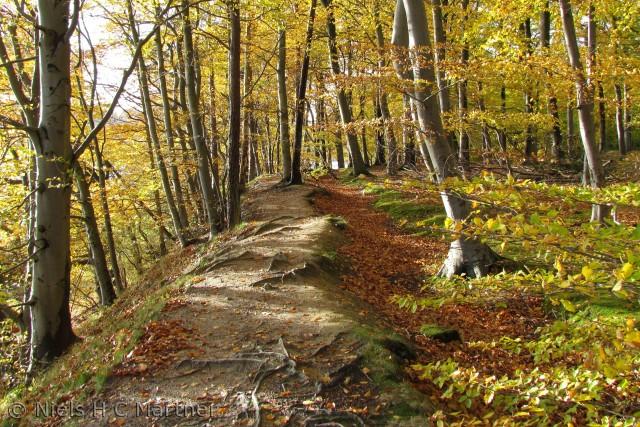 Skoven ved Teglgård i Middelfart. En efterårsdag i 2011.