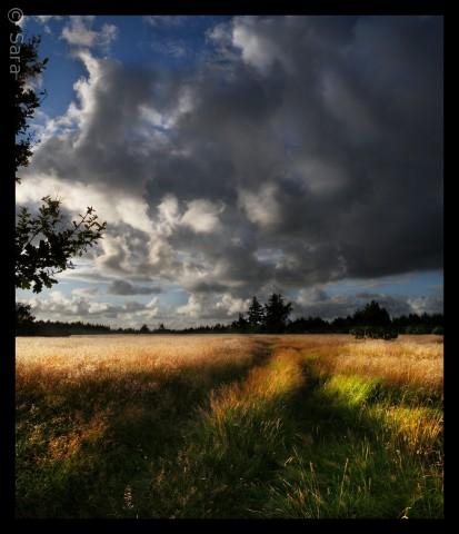 En fantastisk dag i Thy. Himlen er høj og landet er skønt. Heden er varm og blæsten fra vest gør skyerne vilde og voldsomme..   Sara Sandahl saravinder@hotmail.com