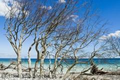 Træer på stranden under Møns klint, på en baggrund af tropikalsk blå himmel og hav.