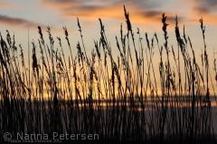 Denne solnedgang er fanget ved stranden på Læsø, en forårs aften.