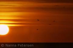 Solnedgang set fra stranden på læsø.