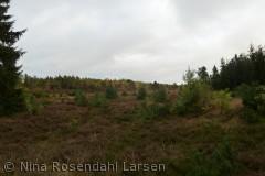 Set fra Vestre Rullebane, Frederikshåb Plantage ninarlarsen@yahoo.dk