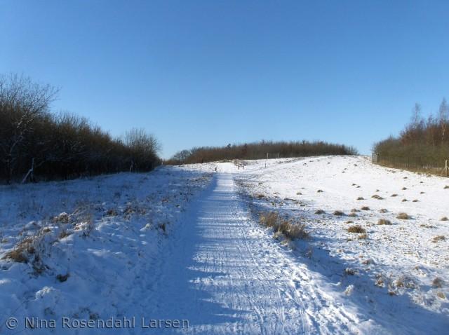 Ingen dyr, men masser af sne og kulde ninarlarsen@yahoo.dk