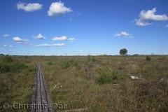 Stien fører ud på den ca. 2000 ha store højmose i Lille Vildmose