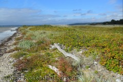 Rosenvold på sydsiden af Vejle Fjord. ninarlarsen@yahoo.dk