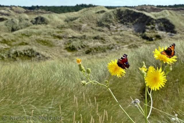 Det er ikke kun på stranden der er liv. Klitplantagen byder på mange smukke oplevelser hvis man har øjnene med sig.