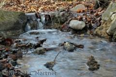 En lille bæk i Tybrind Skoven, i oktober måned