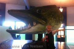 Billedet er taget på Aqua centeret i Silkeborg og forestiller Sally og gedden.