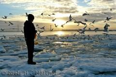 Når vandet fryser til at det dejligt at man kan hjælpe fuglene. Foto fra Strib i Februar måned.