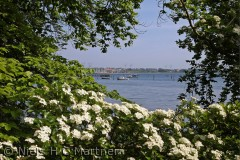 Udsigt fra Teglgårdsskoven mod Middelfart Marina, taget i Juli måned 2012.