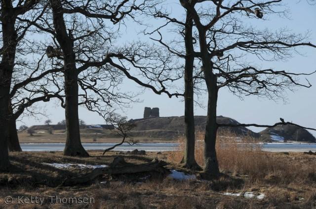 Kalø Slotsruin er et besøg værd på alle årstider.