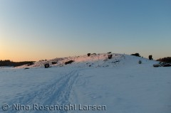 Bakkeø mellem Rørbæk Sø og Lillesø ninarlarsen@yahoo.dk