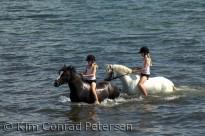 Heste og ryttere i vand