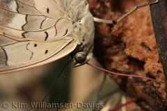 taget i sommerfuglehuset på Bornholm
