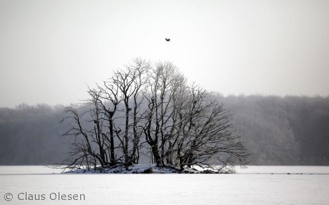 En havørn flyver i minus 17 grader og svævende snekrystaller hen over Nørresø i februar 2012.