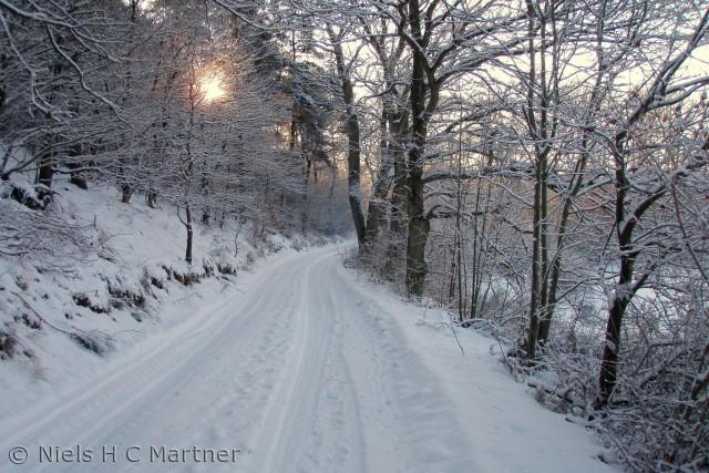 Billedet er taget i Tybrindskoven en dag i Februar måned.