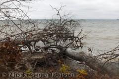 Rosenvold-kysten ud mod Lillebælt