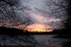Daggry på Gribsø, iden mørke Gribskov på en kold vinter morgen.