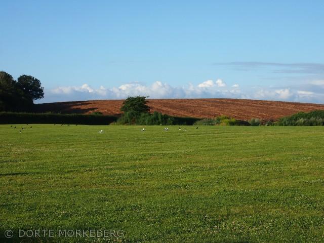 Billedet er taget et sted i nærheden af Bøgebjerg. Marken er slået , fuglenehviler sig og græsset er grønt. Billedet er taget den 17 juli 2012