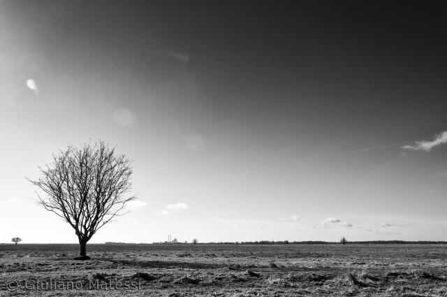 Den flade Vestamager, gammel havbund konverteret til overdrev, er min arbejdsplads. Som naturvejleder for Københavns Naturskole er jeg herude dagligt, grebet tit af den savanne stemning, som dufter lidt af Afrika, med Danmarks hovedstad i horisonten.