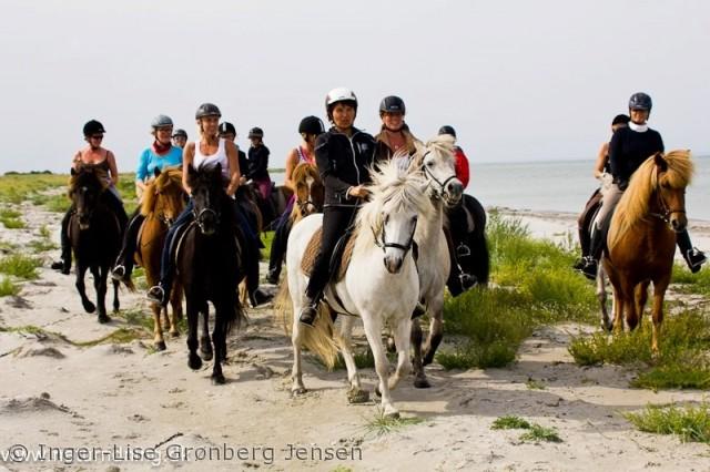 Ridning på islandske heste fra Rønnergården Læsø