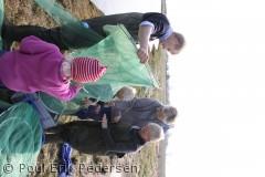 Om foråret fanges de første rejer på Drejø.