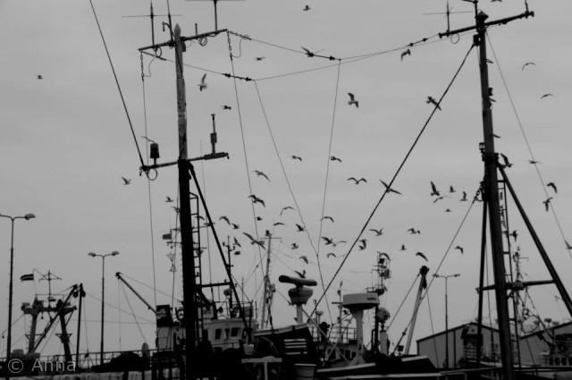 En tur med kameraet nede ved Nexø havn endte med dette billed. Navn: Anna Ellermann