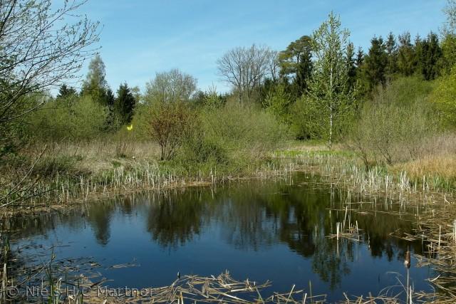 En lille skovsø i Tybrind Skoven ved Middelfart.
