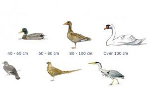 Fuglenøgle