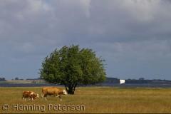 Bognæs i Roskilde fjord er en rigtig naturperle, hvor der bl.a. findes Havørne og vild natur.