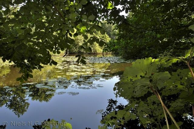 Ved Brænde Mølle Å i Middelfart Kommune, kan man gå på små stier langs med vandløbet.