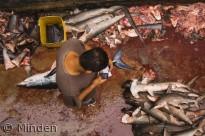 Trusler mod fisk